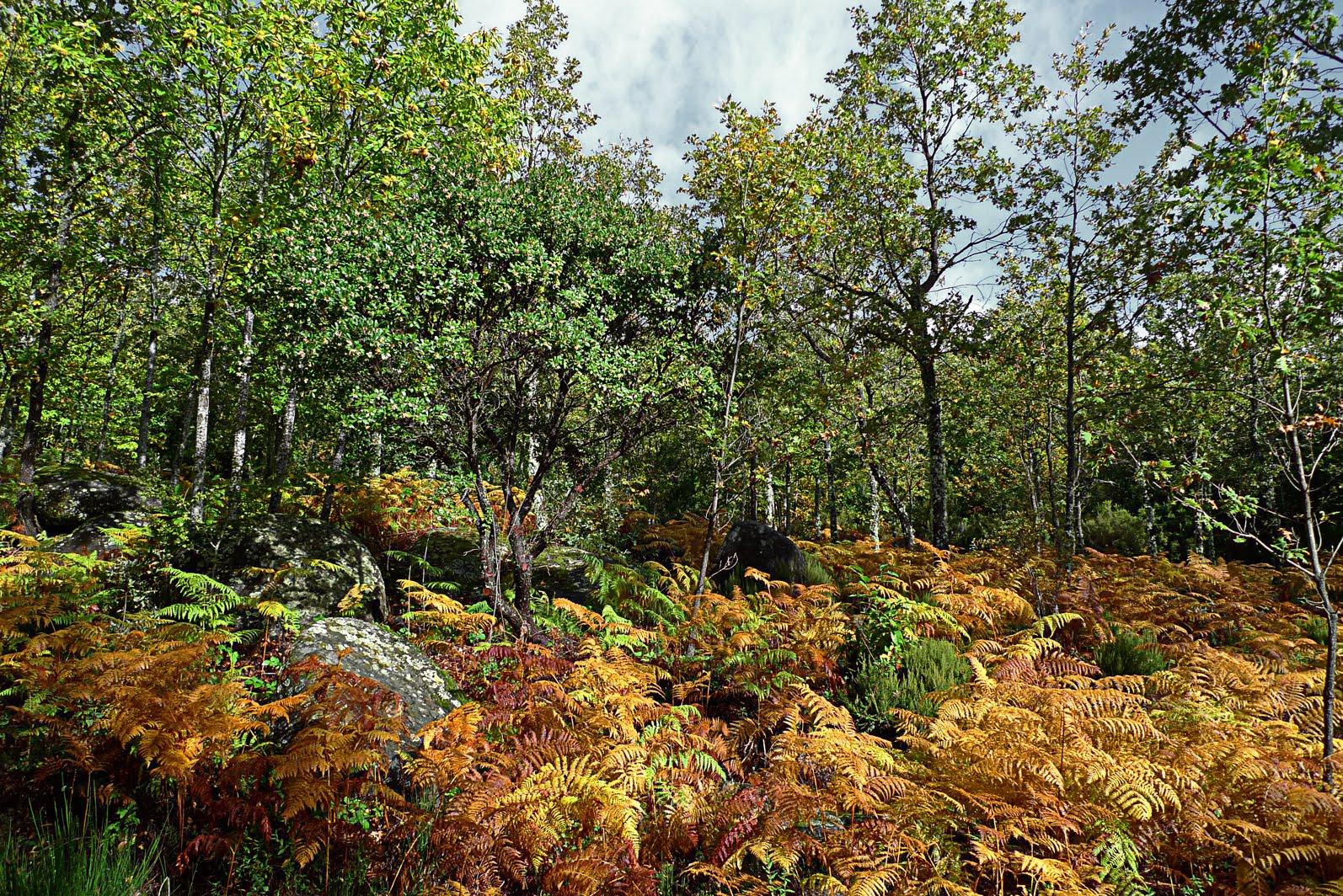 Resultado de imagen para arboles de hojas anchas en los bosques