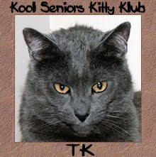 TK is proud to be a senior kitty.