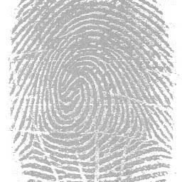馬太蝴蝶-皮紋檢測,生命潛能: 四大基本皮紋之1-動機型/認知型/主觀型