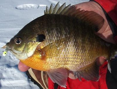 sunfish3.jpg