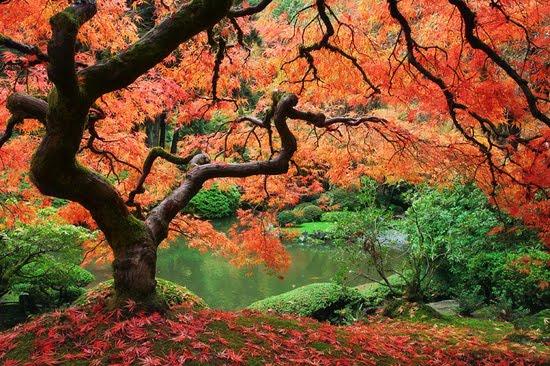 Eden nature photo