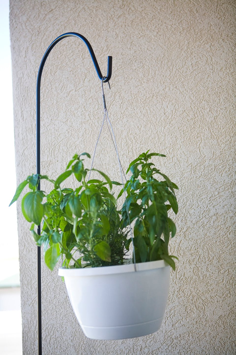 Vegans Living Off the Land: Indoor Hanging potted plants on Stand For Hanging Plants  id=82278