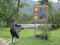 Cassowary sign in Port Douglas Australia