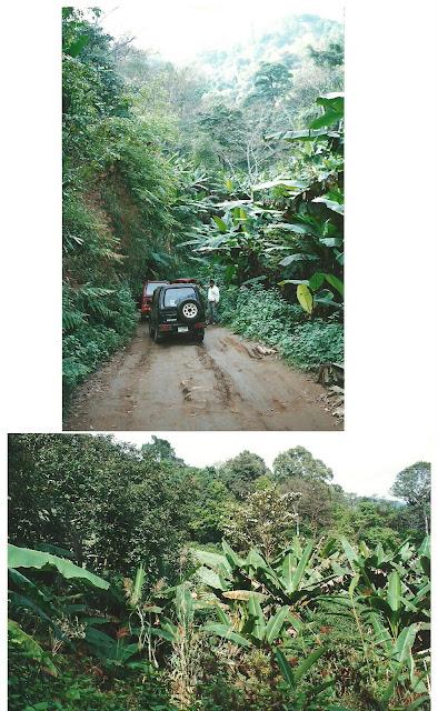 יערות הגשם בתאילנד