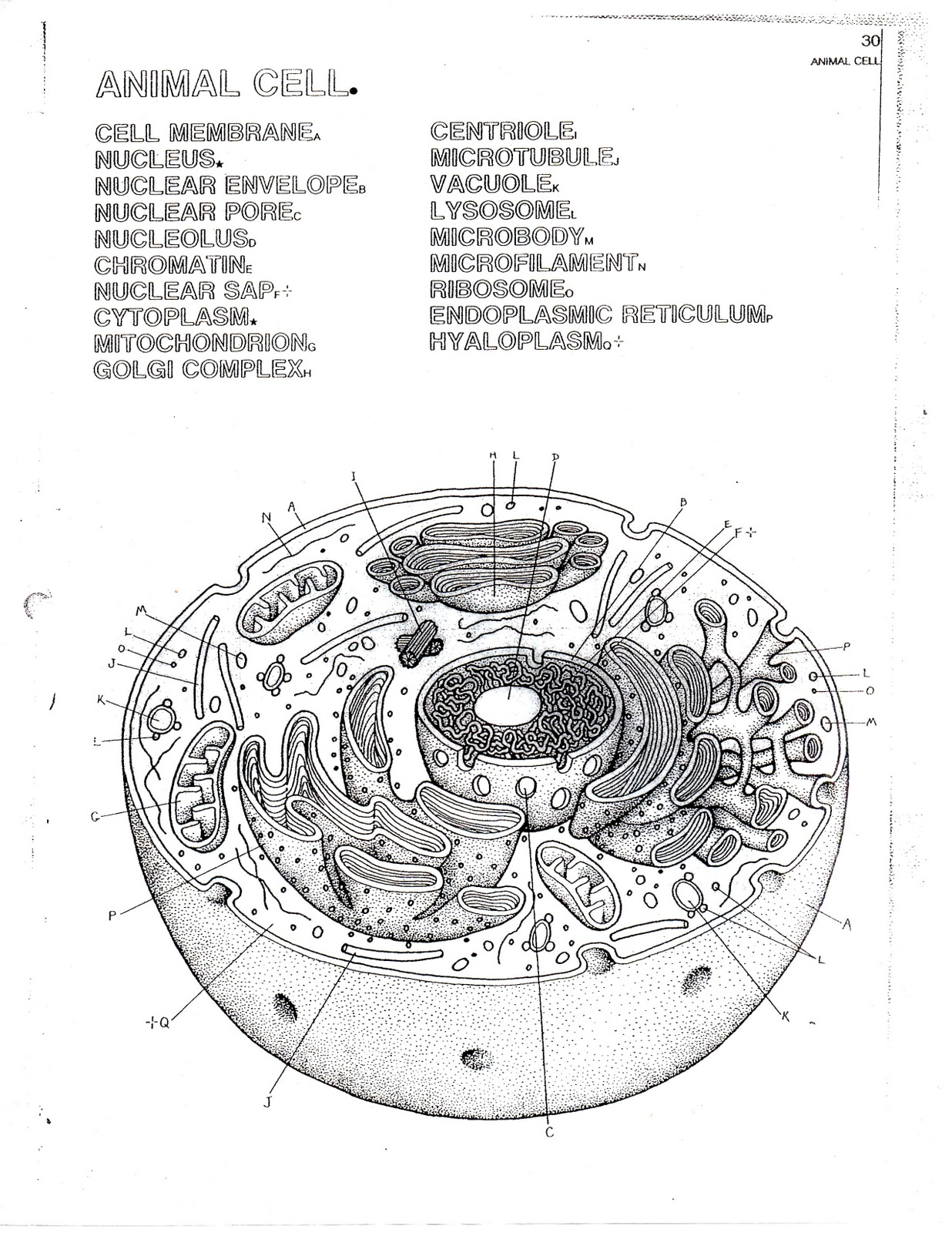animal cell diagram no labels headphone jack pinout female the bioblog bio sheets 1 6 basic units of life