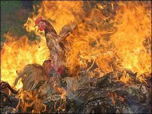 http://3.bp.blogspot.com/_bv90dt_VLys/SUdt2I9taDI/AAAAAAAAAK4/4xsydGLDAe0/s320/avian_flu.jpg Being Burned Alive