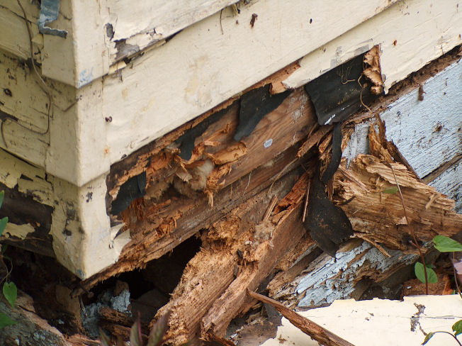 Rayco Painting Newsletter Dry Rot Issues On House