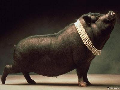 Resultado de imagem para porco guilhotinado