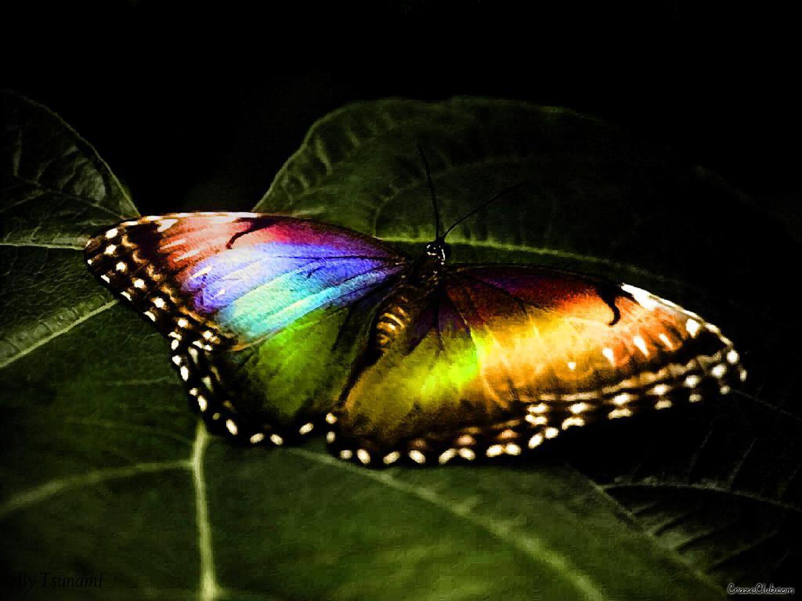Enjoy: Butterfly Beautiful Wallpapers