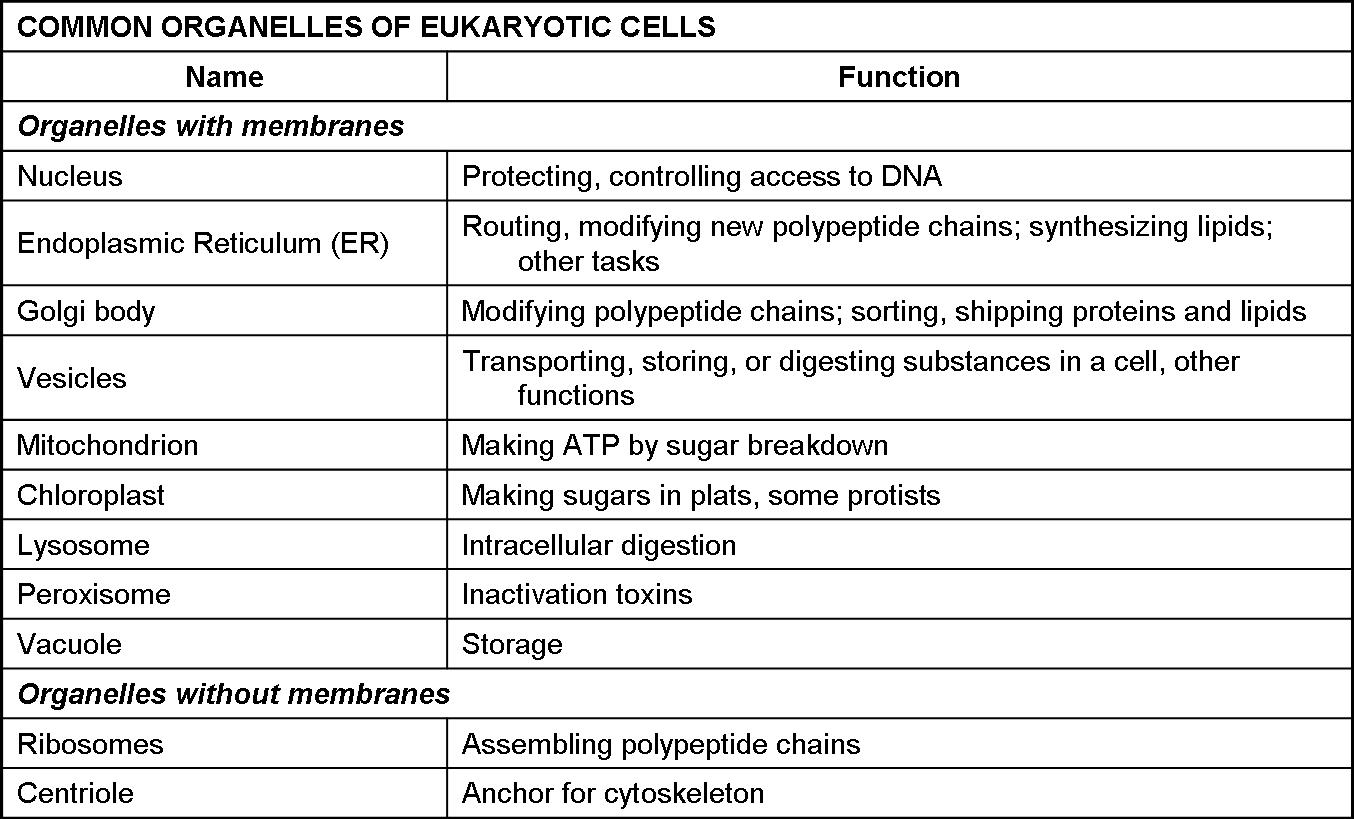 Biology Introduction To Life Module 5