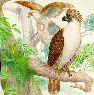 águila monera Pithecophaga jeffreyi aves de Filipinas en extincion
