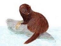 extinct Sea mink