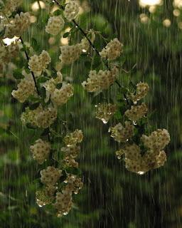 satu episode hujan