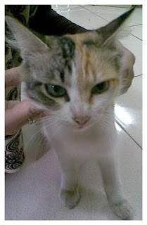 kucing kampus