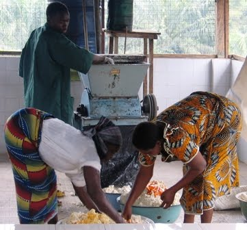 IITA News and Updates: IITA's R4D work changes cassava