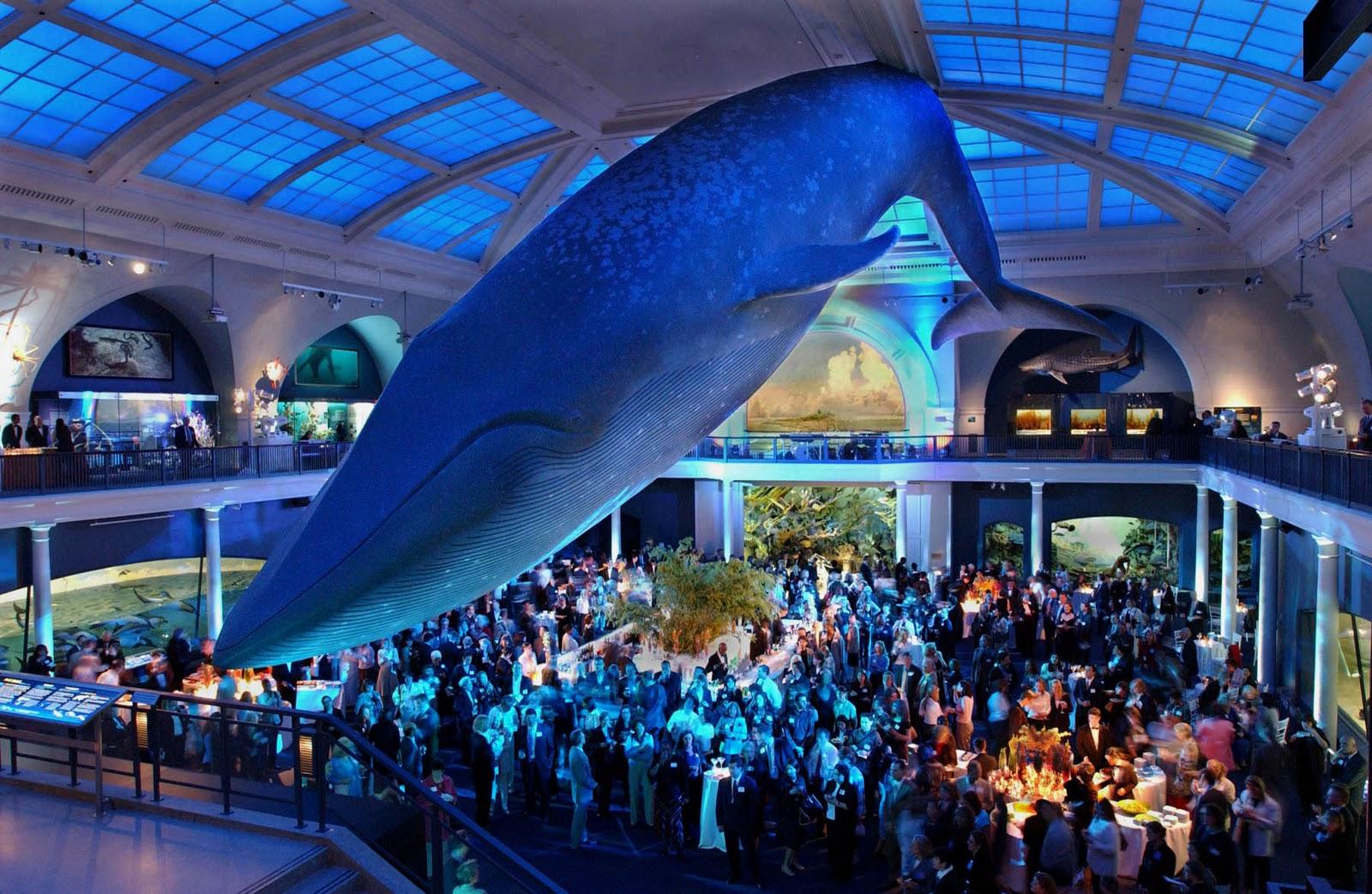 Ocean Night Natural History Museum
