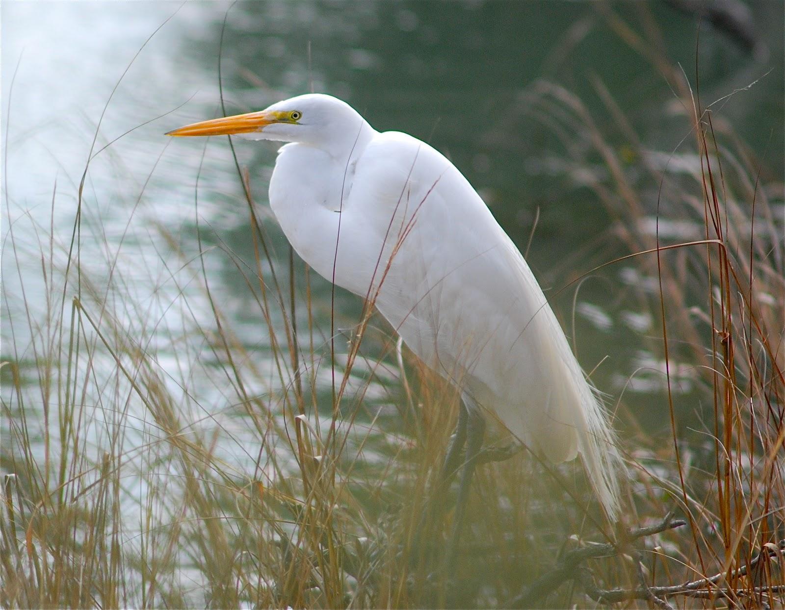 South Carolina Birds Images Transit Notes The Wisdom Of Jpg