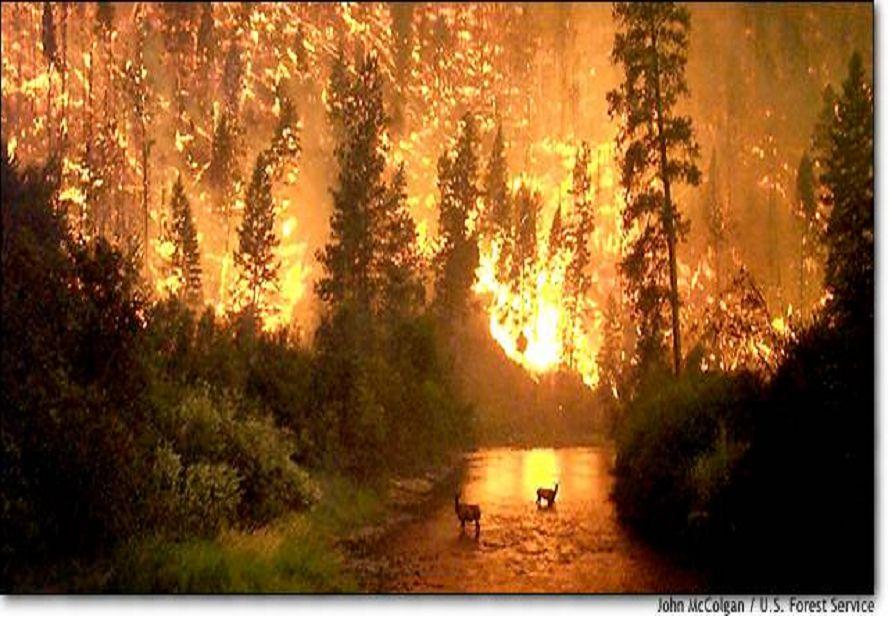 Mi mundo sin Humo: Los incendios forestales...