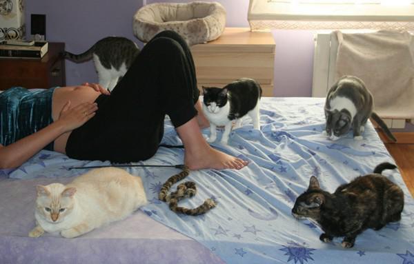 95ea55d1b Hace algunos años se ha popularizado una nueva excusa para abandonar gatos