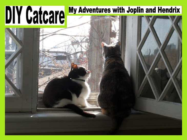 DIY Catcare: Fatty Liver Disease (aka Feline Hepatic Lipidosis)