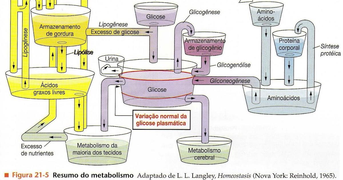 alimentos que aumentan el metabolismo resultados