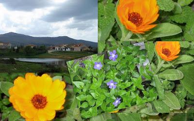 imagen floral