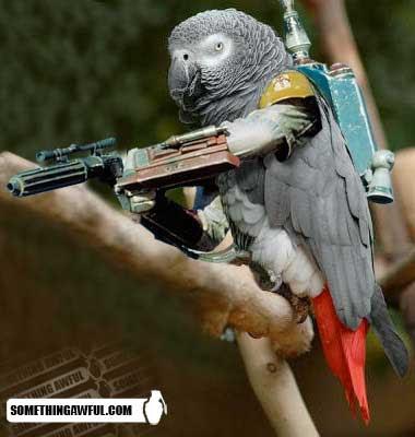 Unduh 62 Foto Gambar Burung Lovebird Editan   Gratis