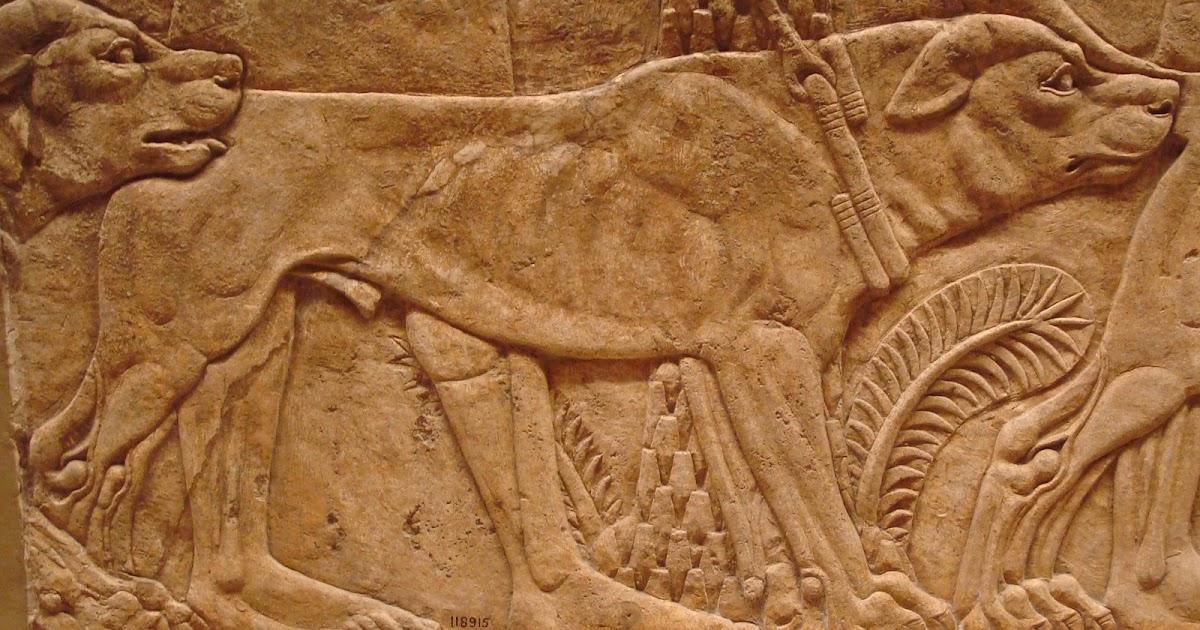 carolines miscellany assyrian animals