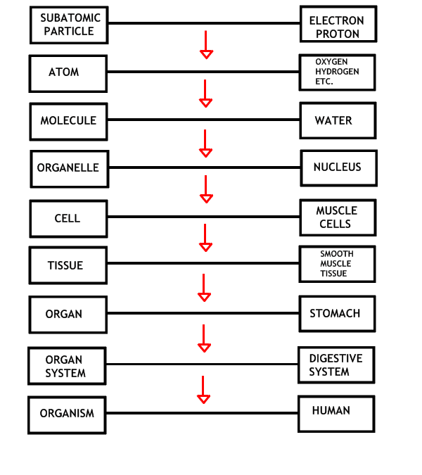 Biological Levels Of Organization Worksheet Free ...