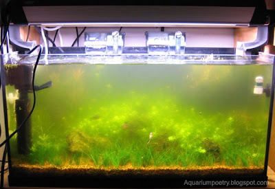 How to clear green aquarium water