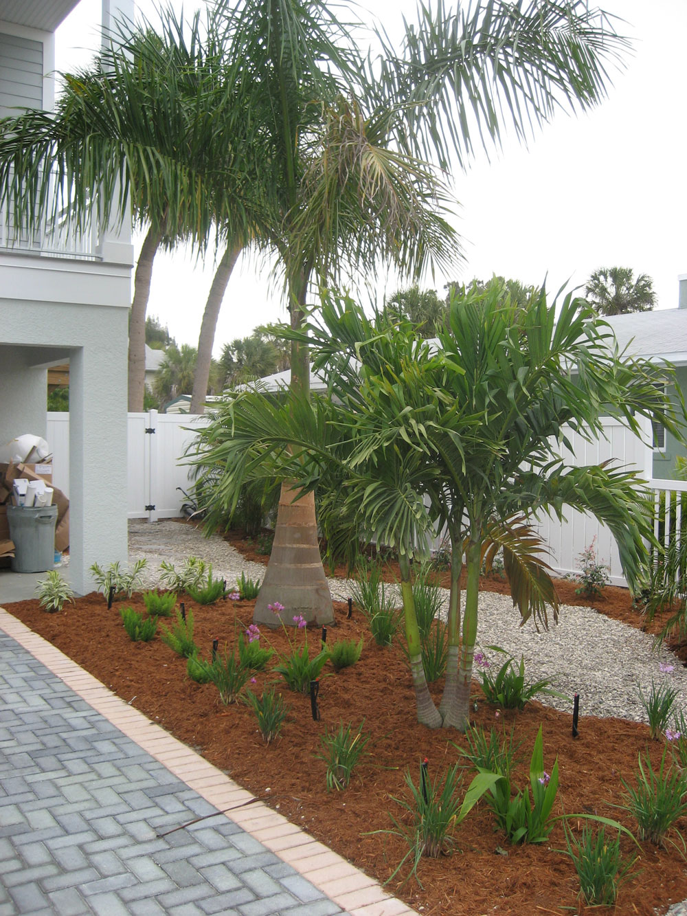 Landscaping and home gardens with palm trees for Trees for back garden