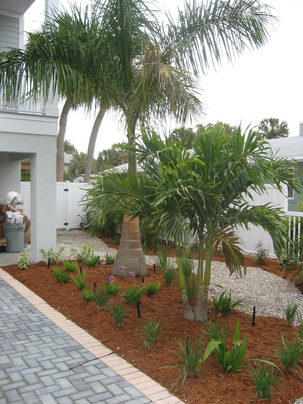 Palm Tree Landscaping Ideas - Native Home Garden Design