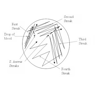 printable flash cards Wire Harness Drawing