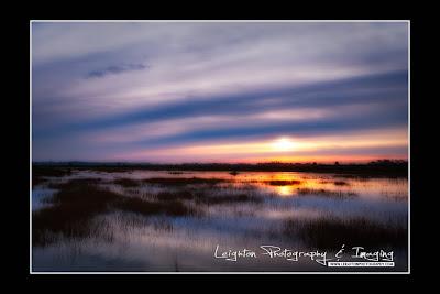 Dawn Over the Salt Marsh