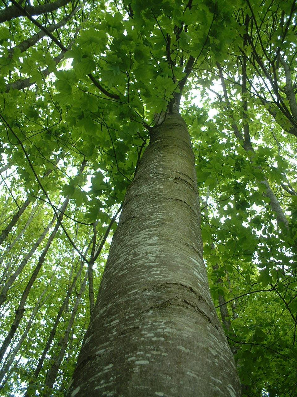 Forêts & Bois De L'Est: La Filière Se Penche Sur L'avenir