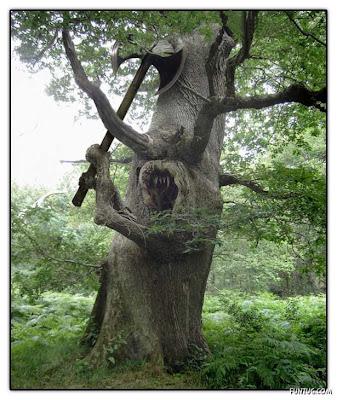 Foto Pohon Aneh Gambar Pemandangan Alam Unik