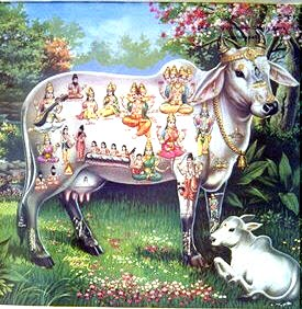For Cow Protection - Vishwa Mangala Gou Grama Yathra