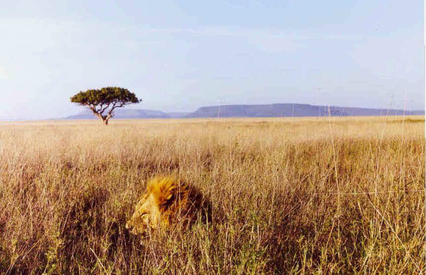 Victoria Falls Live Wallpaper The African Grassland