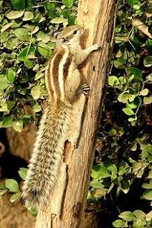 No Squirrel Love
