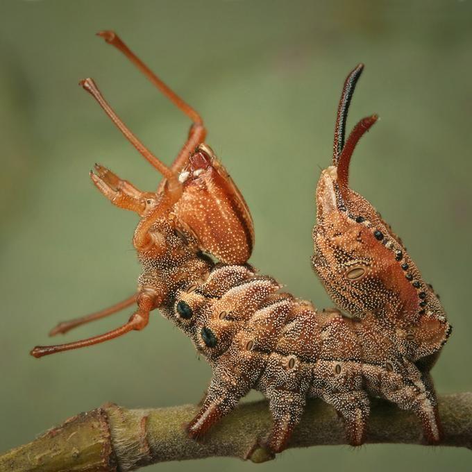 [Review] 昆蟲的擬態 | 擬態生物學