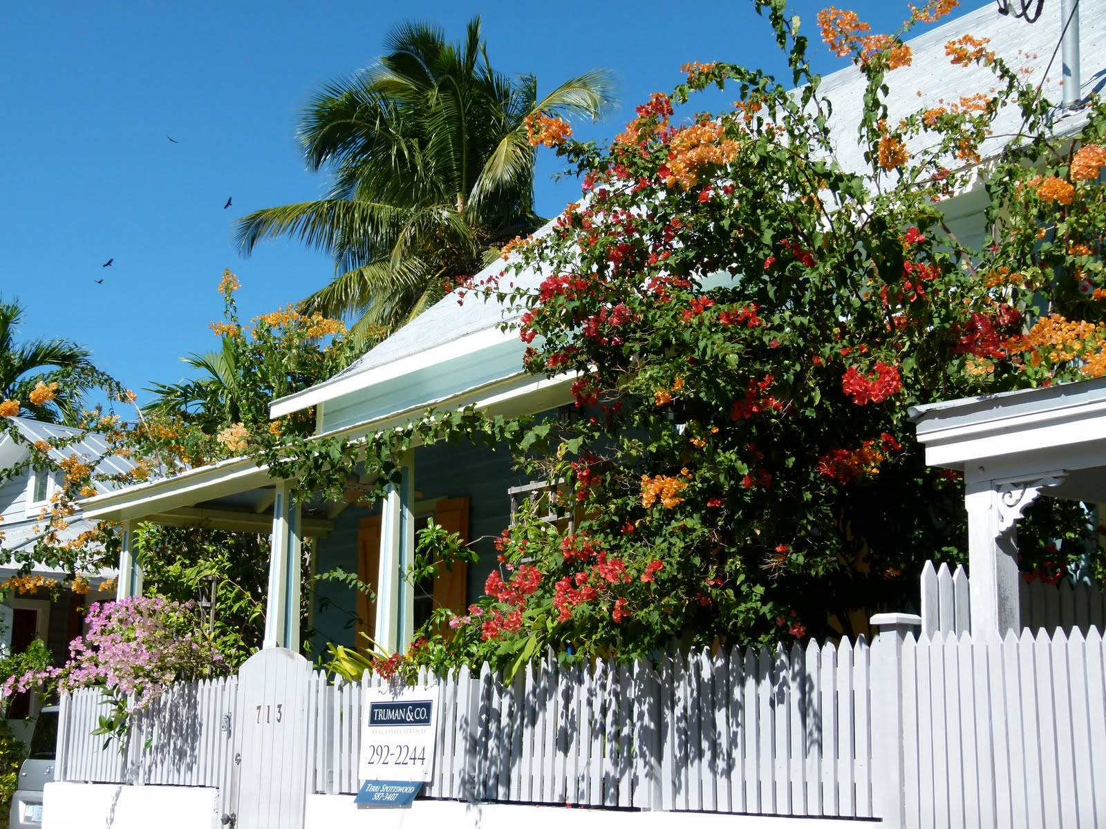 Key West Vacation And Visit Guide Fantastic Flowers Of
