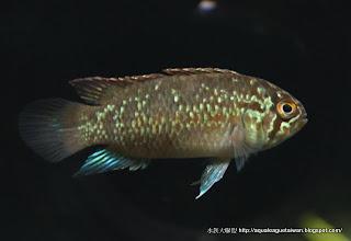 水族大聯盟: 十二月 2009