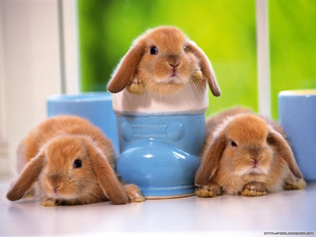 We Love Cute Pets ♥: Cute Pets