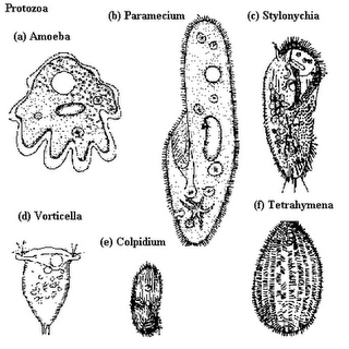 do you know!: Protozoa
