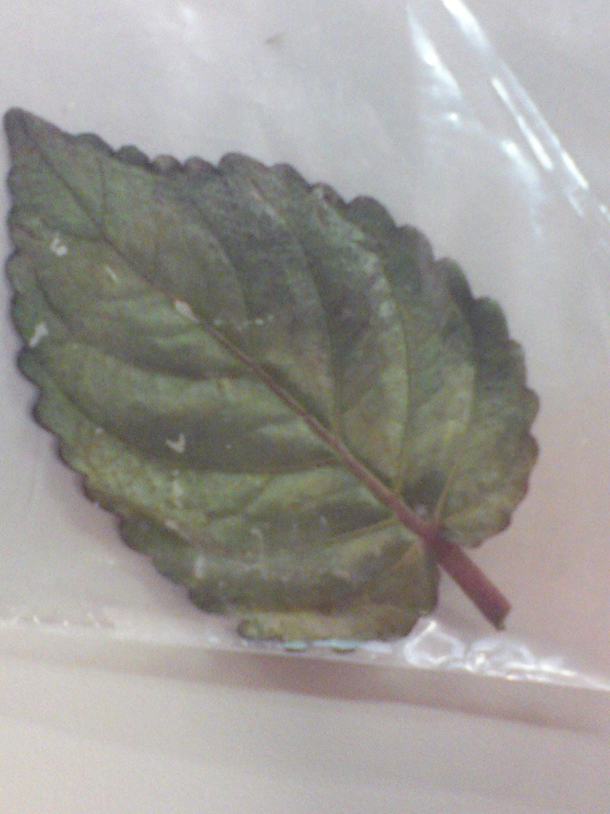 Science Worksheet Leaf Specimens