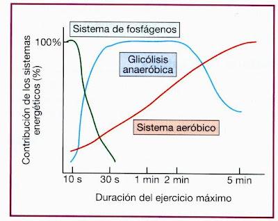 Metabolismo aeróbio vs anaeróbio