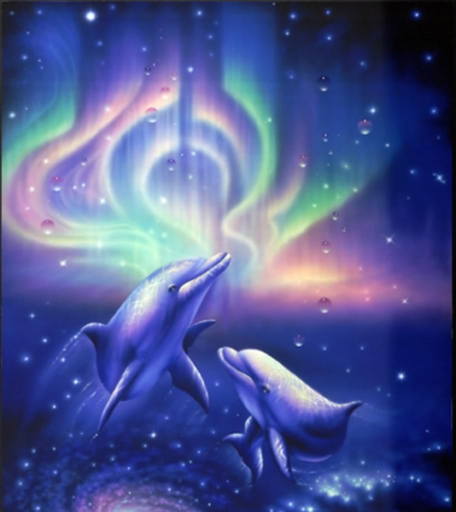 海豚的世界: 海豚的種類