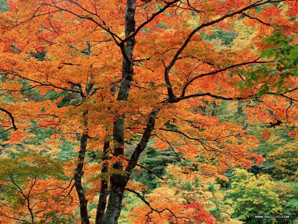 Fall Paintings Wallpaper Free Wallpapers Seasonal Wallpapers And Screen Savers