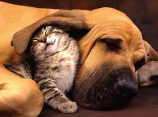 Gato, perro y otras mascotas -