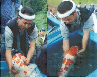 The Width Is Twice Size Of His Forearm You Can Tell By That These Koi Fish Were Well Fed In Mud Pond